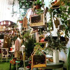 Ya tenemos las casitas terrario con plantitas de @mpaz_designstudio, colgadas de nuestro árbol. #planta #decoracion #eco #shopping #Sevilla #francos9