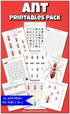 Ant Printables Pack with 60 ant-themed worksheets and activities for kids ages This is a great resource for a preschool or kindergarten insect unit! Insect Activities, Gross Motor Activities, Kindergarten Activities, Preschool Activities, Ant Crafts, Insect Crafts, Daily 5, Curiosity, Minibeasts Eyfs