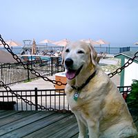 Dog Friendly Maine Guide