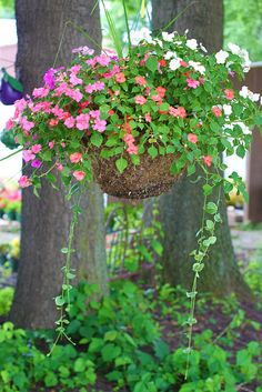 hanging basket of Impatients great for the shade.My front yard is so shady they love it!