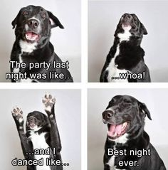Funny, Memes, Pictures: funny-animals-5-4