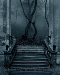 Steps that lead to The Forest...