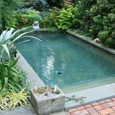 Plunge Pool Cost pools have constructed the uk s most televised pool channel 4 s big Diy backyard splash pad Outdoor furniture Design an. Small Backyard Pools, Backyard Pool Landscaping, Natural Swimming Pools, Small Pools, Swimming Ponds, Big Pools, Outdoor Swimming Pool, Landscaping Ideas, Pool Spa