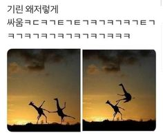 Memes Humor, Funny Jokes, Hilarious, Animal Memes, Funny Animals, Cute Baby Dogs, Cute Korean Boys, Life Is An Adventure, Funny Moments