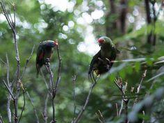 """En su Parque Marino Natural """"Arrecifes de Puerto Morelos"""" descubrirá una gran variedad de peces tropicales multicolores"""
