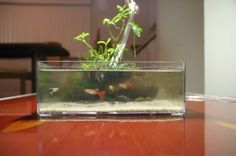 Wabi-Kusa Style - The Planted Tank Forum