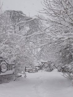 I love when it's like this - every twig outlined in snow!