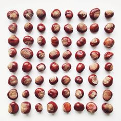 Conkers!