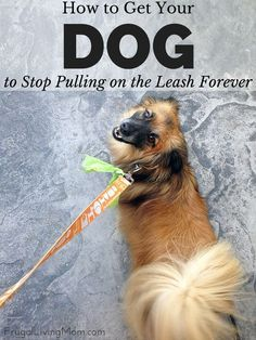 Does your dog pull on the leash? It's of the more difficult habits to break. But I have a few tips that have helped us and might help you, too, without having to spend a fortune on a professional dog trainer. Tips for dog training. Raza Pug, Aggressive Dog, Dog Training Tips, Leash Training, Toilet Training, Dog Care, In This World, Dogs And Puppies, Doggies