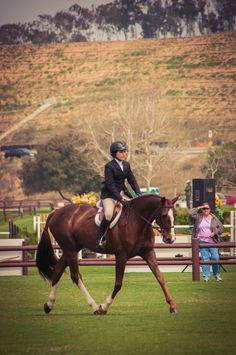 Hunter under saddle