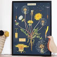 Pissenlit Main Colors, Vibrant Colors, Colours, Scandinavian Cottage, Flower Chart, Image Deco, Off Colour, Botanical Prints, Crochet Flowers