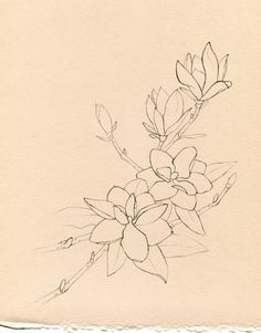 Magnolia Tree Tattoo | Pin Magnolia Tree Tattoo Meaning on Pinterest