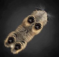 This is what cats look like from underneath https://ift.tt/2IkgGNo #Puppy #Puppies #Pics #Dog #Adopt #Pets #Animals