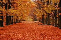 Hoenderloo Forest Walk: Hoge Veluwe National Park, Netherlands. We know, we know—this isn't exactly a trip you can do over the weekend. However, our shout-out to Hoge Veluwe National Park is a reminder that there are incredible locations across the world to see beautiful foliage. If you find yourself in the Netherlands in the fall, try the forest walk starting at the Hoenderloo entrance.