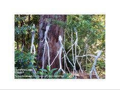 The Guardians by Elizabeth Poole in Treeline Maroochy Botanic Gardens 2010.