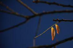 Yellow Leaves  DDD    CopyrightⓒNAKIzm