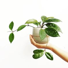 Do It Yourself Discover Ideas Planting Succulents, Planting Flowers, Growing Greens, Growing Plants, Plant Aesthetic, Plants Are Friends, Nature Plants, Green Plants, Plant Care