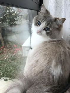 Cute Cat And Dog Names above Cute Animals Funny Pictures. Cute Animals Pictures Drawings at Cute Cat And Dog Coloring Pages Cute Cats And Kittens, Baby Cats, Kittens Cutest, Fluffy Kittens, Fluffy Cat, Pretty Cats, Beautiful Cats, Animals Beautiful, Pretty Kitty