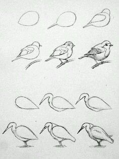 Pencil Drawing Techniques - Learn the easiest ways to draw birds. Step by Step bird drawing tutorial. Pencil Art Drawings, Bird Drawings, Art Drawings Sketches, Easy Drawings, Sketches Of Birds, Birds Drawing Images, Simple Bird Drawing, Easy Animal Drawings, Drawing Lessons