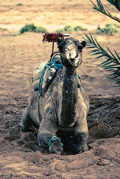 i want a camel  ♥