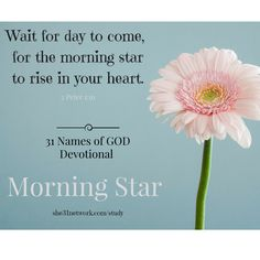 FREE Online Devotional Bible Study with FREE 32-page Workbook and Live Support Group. Study God's Word in a beautiful new way. For details visit www.she31network.com/study Jesus is the morning star - He brings fresh hope and mercy with each new day.