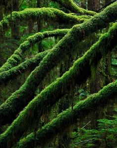 I love moss. Maybe it's due to the weather moss thrives in, I like it cool.