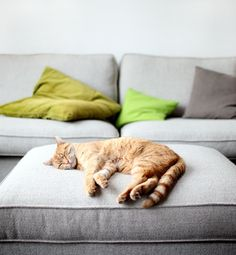 The biggest decor mistakes pet-owners make... meoooow