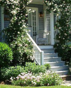 Ideas For Backyard Garden Pergola Climbing Roses New Dawn Climbing Rose, Climbing Roses, Rock Climbing, Unique Garden, House Front Porch, Front Porches, Landscape Design Plans, House Landscape, Rose Trellis