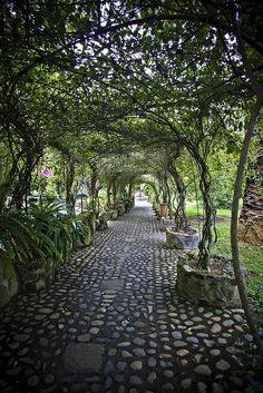 Walkway at Hosteleria and Hacienda Pontavi,. Walkway at Hosteleria and Hacienda Pontavi, Salinas, Ecuador (by Pete Flick). Landscape Design, Garden Design, The Secret Garden, Pergola Shade, Garden Structures, Garden Spaces, Dream Garden, Garden Landscaping, Landscaping Ideas