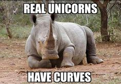 Real Unicorns Have Curves. Hahaha, this is so stupid, but it made me laugh