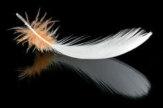goffin feather