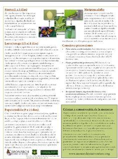 INFORMACIÓN DE LA MARIPOSA MONARCA.