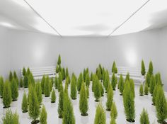 Korean eyewear brand Gentle Monster conveys cool store concept through Quantum project that rotates every 25 days in different themes. Fake Plants, Green Plants, New Interior Design, Modern Interior, Luxury Holidays, Monster, Store Design, Installation Art, Design Elements