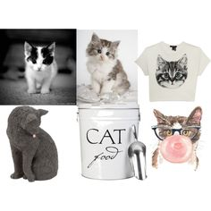 """""""Cute Cats"""" by michelle-anne-1 on Polyvore"""