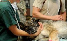 Saiba o que fazer se seu animal doméstico for envenenado