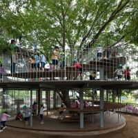 Ring Around a Tree by Tezuka Architects