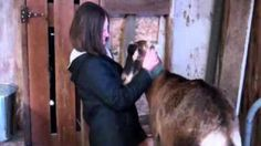 Part 4 - A Day in the Life with Dairy Goats - (Milking (cont.), feeding schedule, hay requirements, via YouTube.
