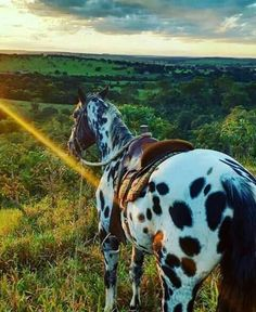 The best view of the world is seen between the ears of a horse.