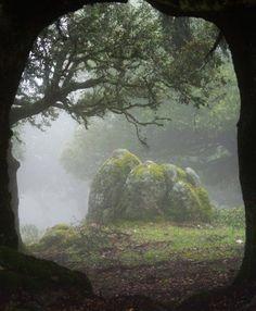 ✯ Forest Portal - Sardinia, Italy