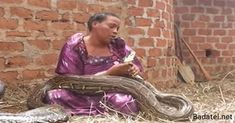 In the Middle Ages there was a woman in India who had a pet python, snake, which loved much. The snake of 4 meters just stopped eating one day. After several weeks of trying to feed it, offering it… Serpent Animal, After Giving Birth, Cry For Help, Tell Her, Teaching Science, Your Pet, Herbalism, Weird, Pets