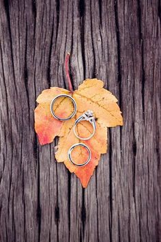 Smart way to present rings for a Fall wedding with the orange-toned maple leave.