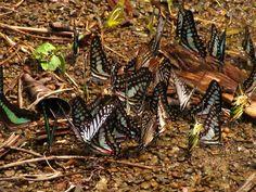 Ngengpui Wildlife Sanctuary - in Mizoram, India