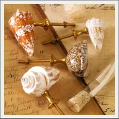 natural seashell cabinet or drawer knobs