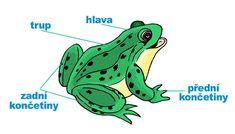 Kreslený ještěrka porno