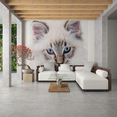 Bílá kočka - fototapeta Samolepící vinylová tapeta 240 x 220 cm