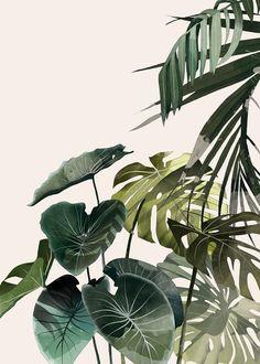 Botanic illustration by very talented Agata Wierzbicka. Artist's works are available here: http://www.lumarte.eu/en/agata-wierzbicka