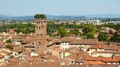 Lucca Torre Guinigi view İtaly  (the tree on the tower) By Alika.-->#Lucca is one of the towns we visit during my #ItayRetreatForWomen.