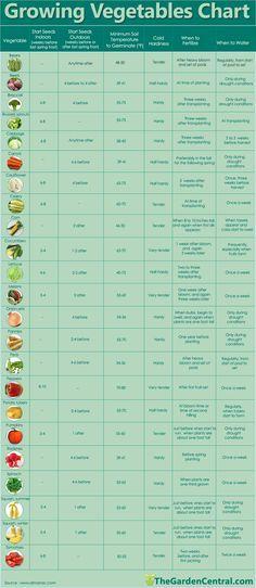 Tabla de vegetales