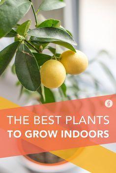 The 16 Best Healthy, Edible Plants to Grow Indoors #indoor #plants #gardening http://greatist.com/health/best-plants-to-grow-indoors