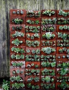 Vertical Garden in brick.  With only a few holes on the blocks you can plant succulent plants, which do not require a lot of Earth ... and create a green wall like the one in the picture.  By be permeable, the brick requires less irrigation than a vase made of glazed ceramics or plastic.   New movement in rural http://www.facebook.com/novosrurais.farmingculture